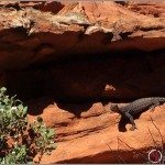 Wild Animals of the Australian Outback