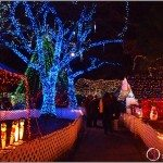 Local Tourist: Bright Nights in Stanley Park